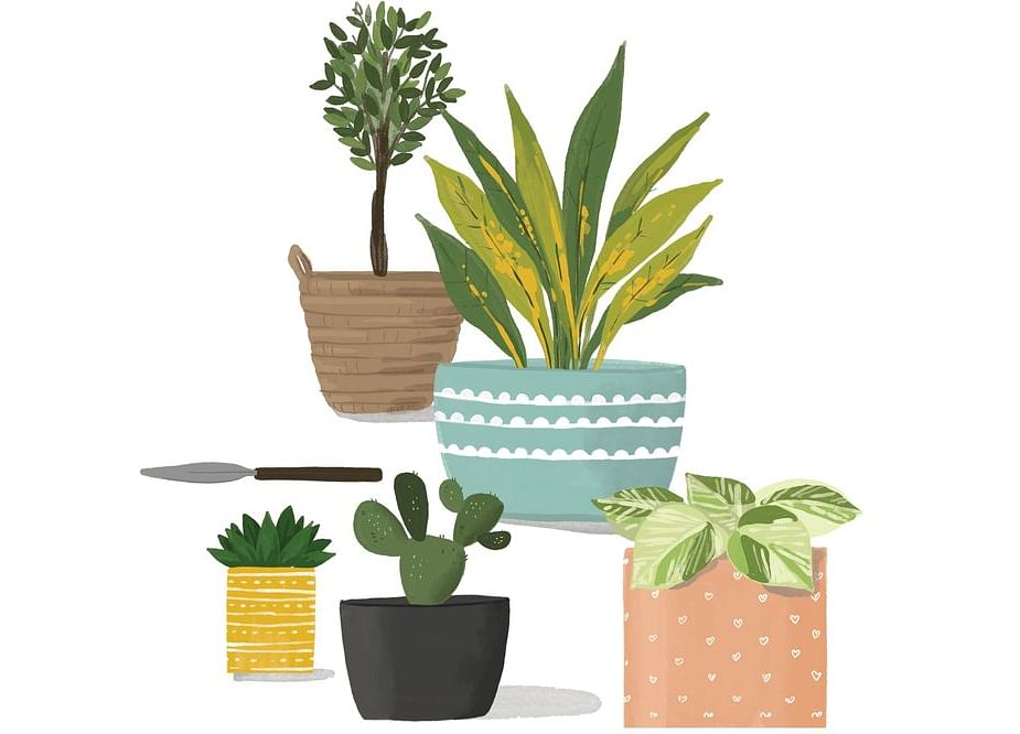How to Keep Your Houseplants Alive After Covid