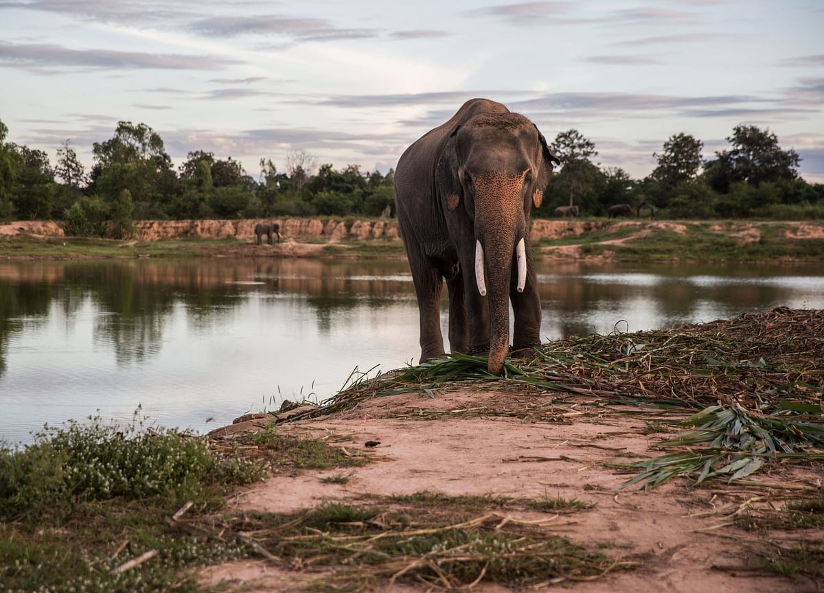 Zimbabwe Considers Mass Elephant Killing, First Time Since 1988