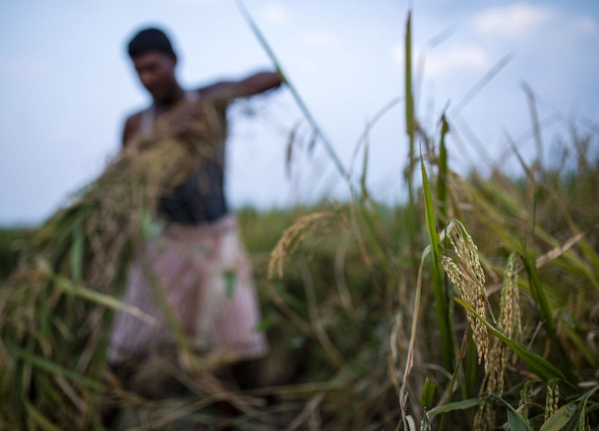 India Seen Keeping Lid on Global Rice Prices With Record Exports