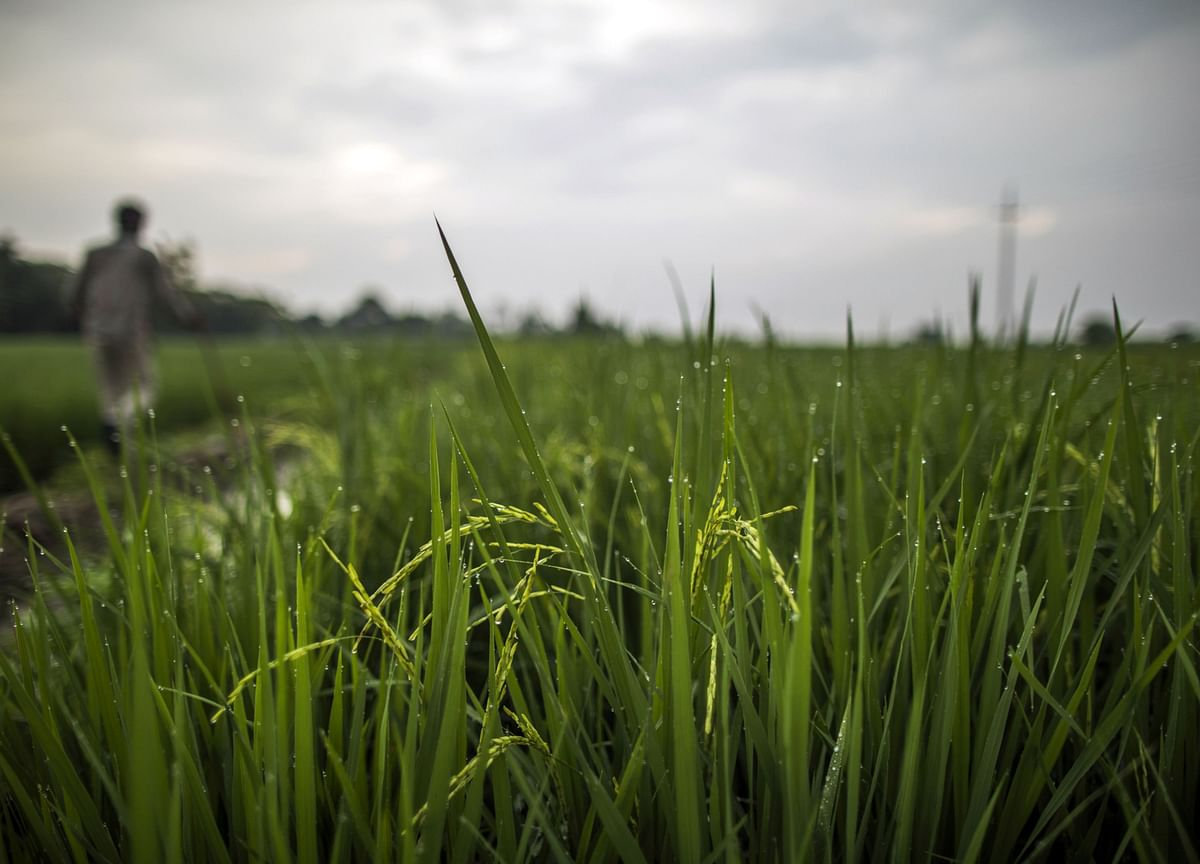 Plentiful Rain Forecast Boosts India's Farm Output Prospects