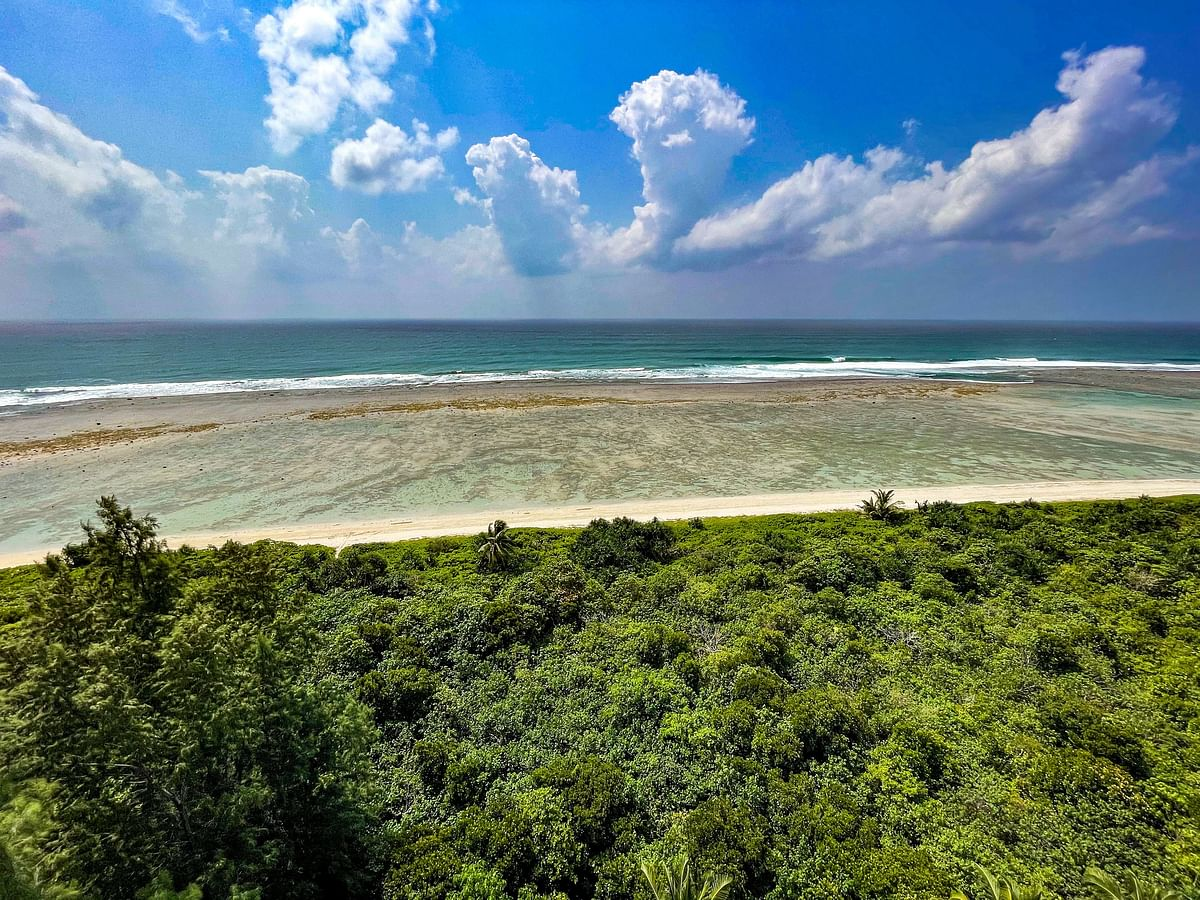 """<div class=""""paragraphs""""><p>The Andaman and Nicobar islands host among the richest tropical forests in India.&nbsp;(Photograph: Adhith Swaminathan, Via Neha Sinha)</p></div>"""
