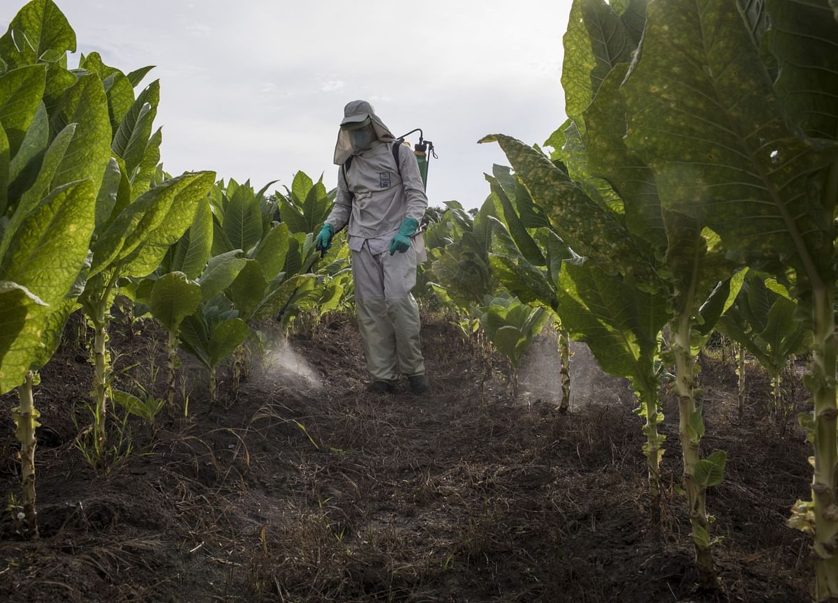 India Pesticides IPO Subscribed 29.04 Times On Day 3