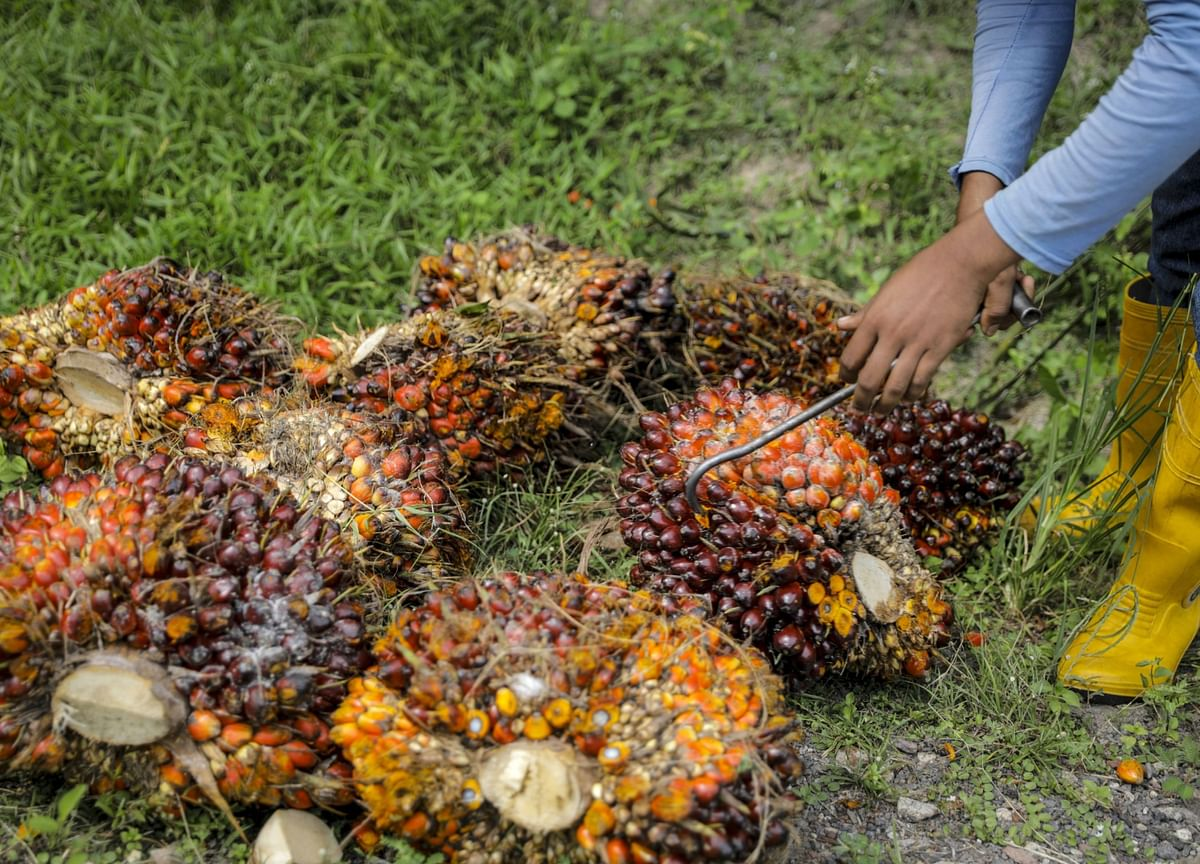 Godrej Agrovet Company Update - Rising Palm Oil Prices Expected To Taper: Motilal Oswal