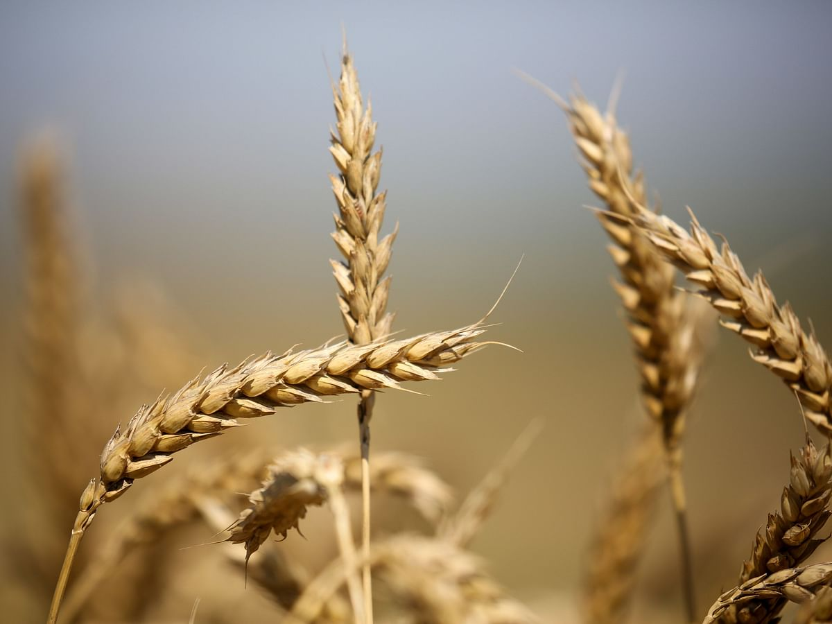 Why Insurers Are Cutting Down On Crop Protection Business