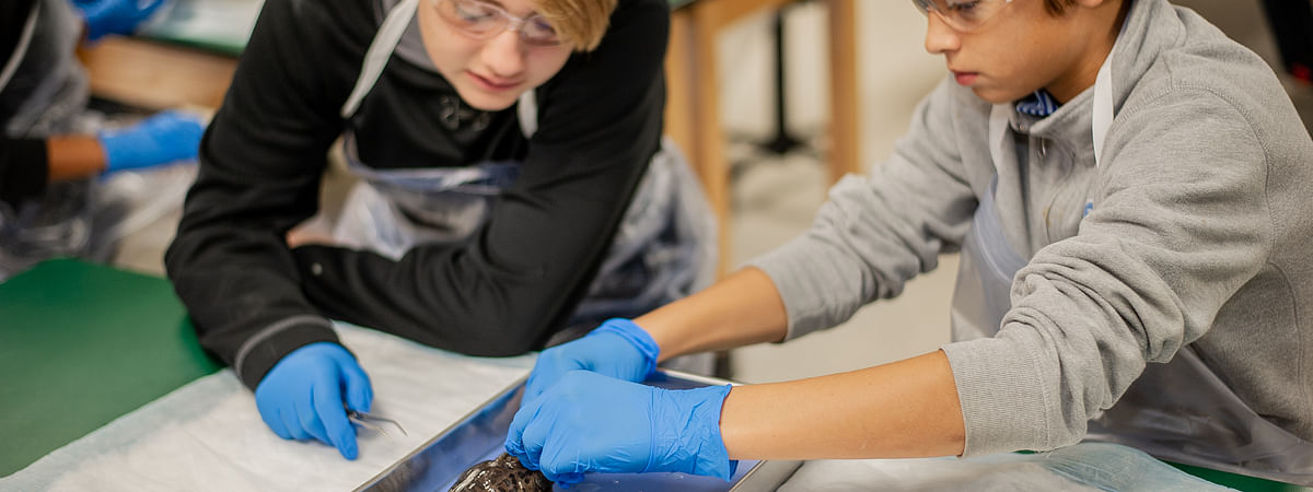 Students learn about structure and function as they dissect a frog.