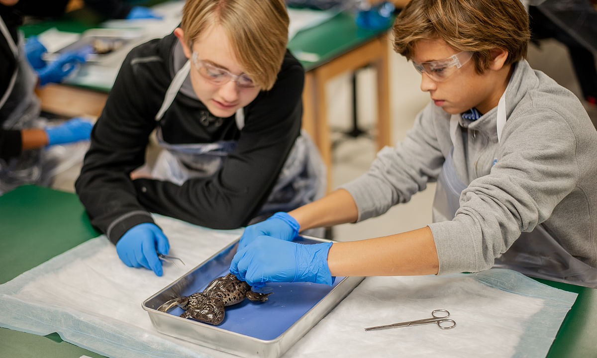 Next Generation Dissections
