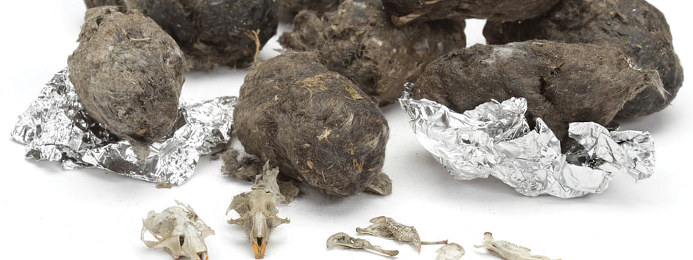 What are owl pellets?