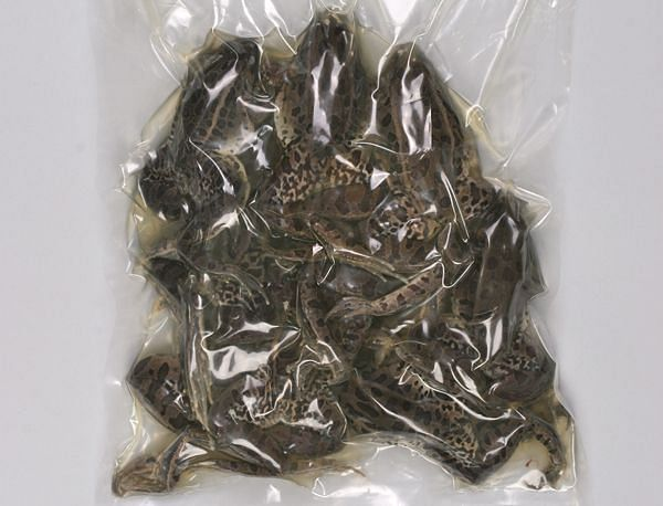 Bulk-bagged frog specimens