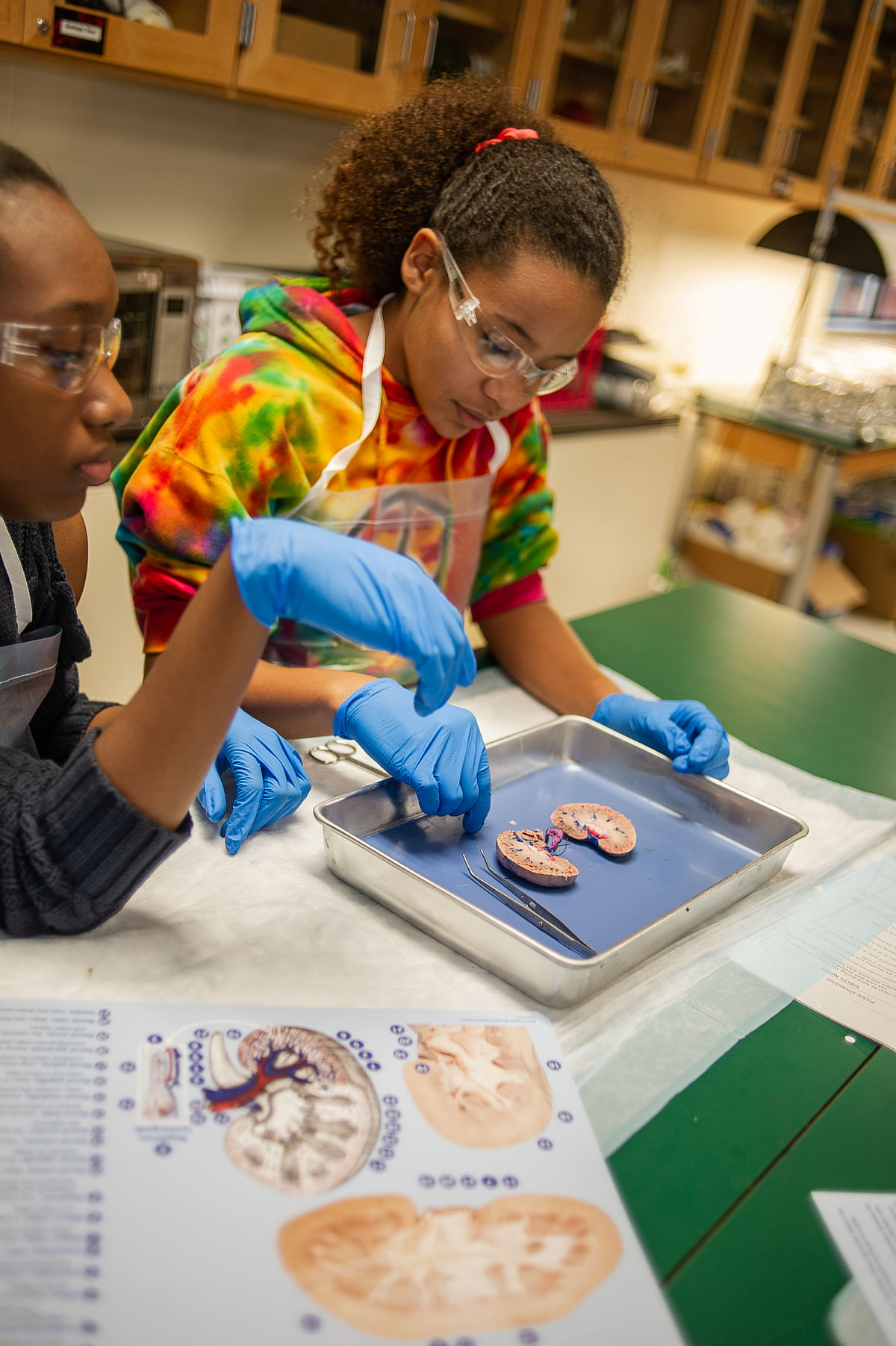 Dissection, the NGSS, and Three-Dimensional Instruction