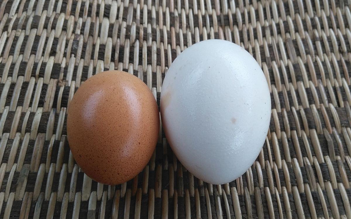 Eggsploring Enzymes Activity