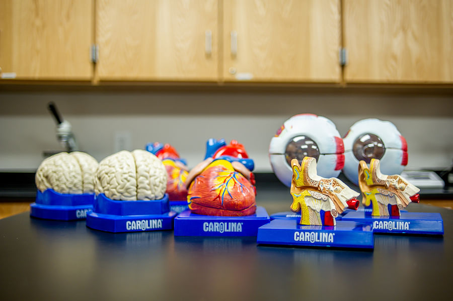 Tips to Get More for Your Anatomy and Physiology Budget