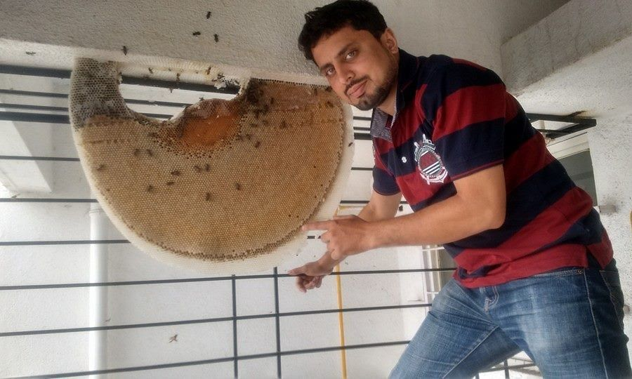Tackling a huge beehive outside the window of a high-rise apartment