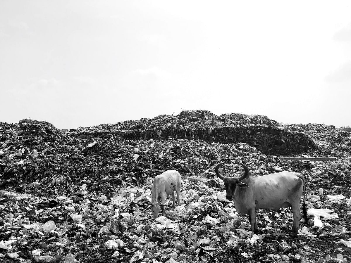Unsegregated dry waste such as plastic, paper and cloth etc goes to the landfill