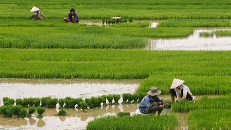 Goa: राज्यातील भातशेती पाण्याखाली