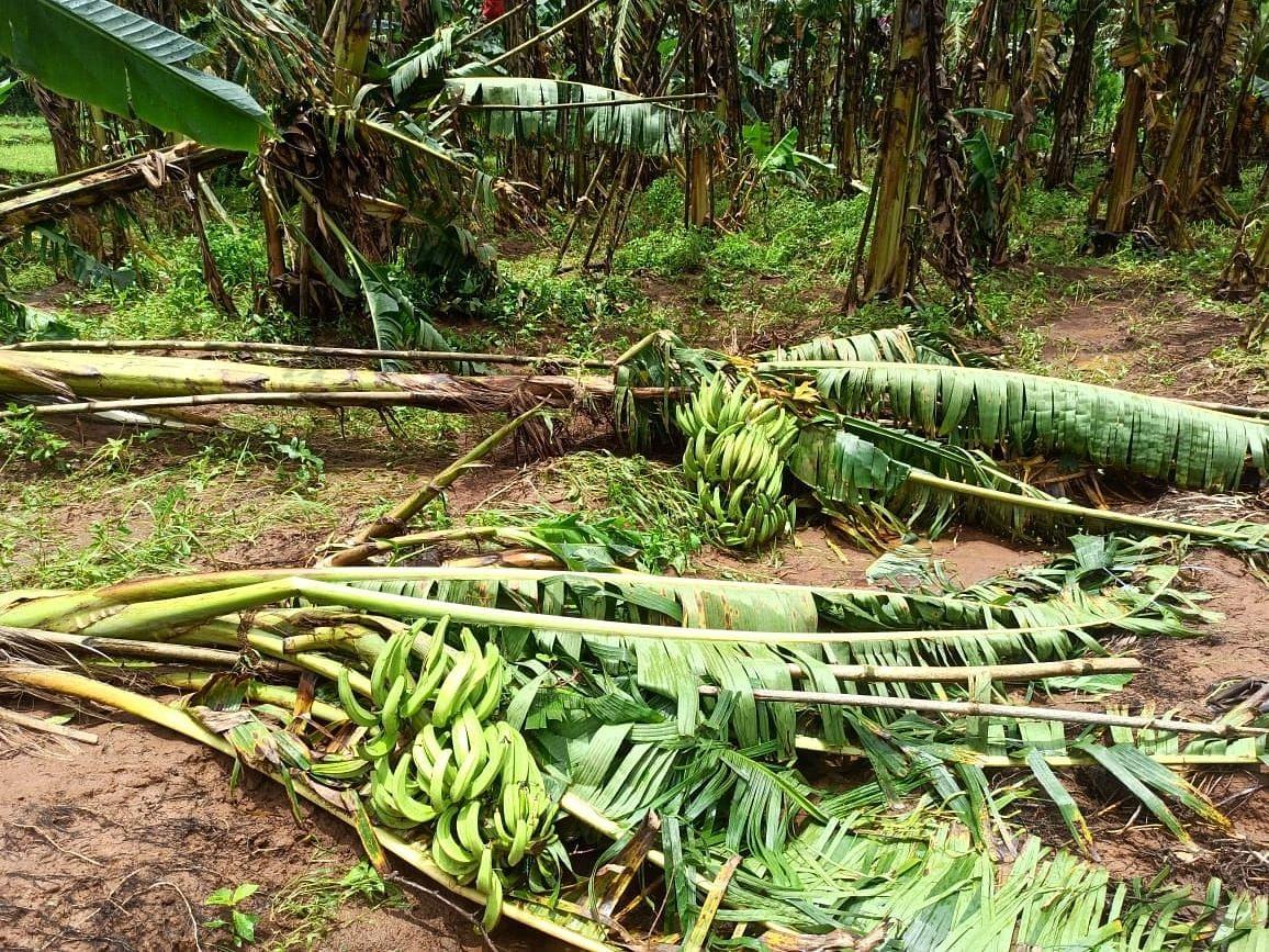 Goa: पेडणे तालुक्यात ३० लाखांचे नुकसान
