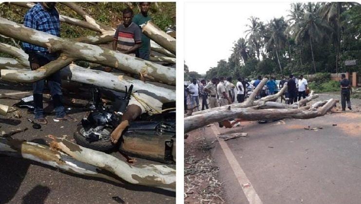 Goa: नुवेत कापलेले झाड पडून 25 वर्षीय युवक ठार