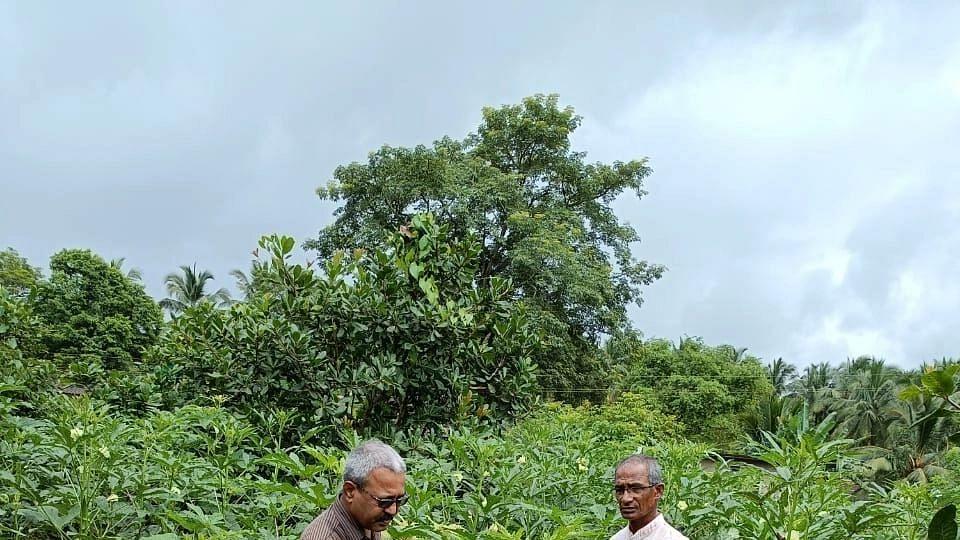 Goa: गोमंतकीयांकडून पारंपरिक भाज्यांचे संवर्धन