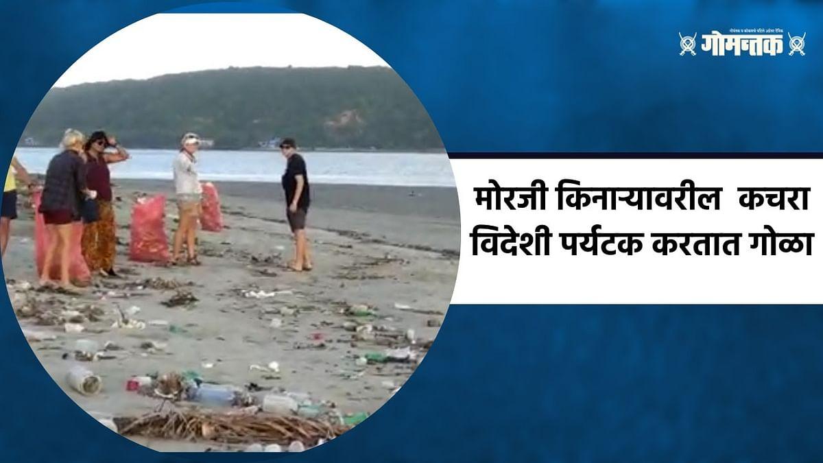 मोरजी किनाऱ्यावरील कचरा विदेशी पर्यटक करतात गोळा; पाहा व्हिडिओ