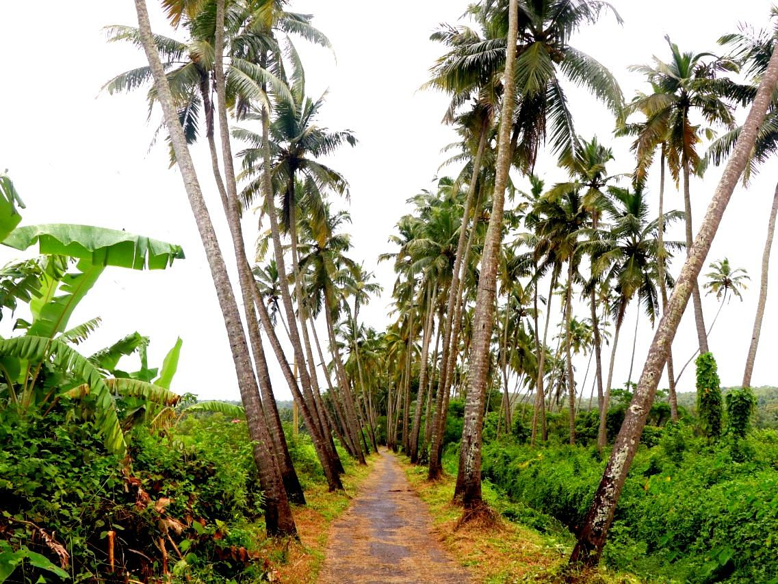 Goa Coconut