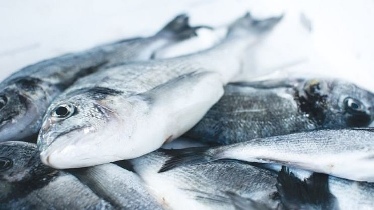 घोळ माशामुळे मच्छीमार झाला मालामाल