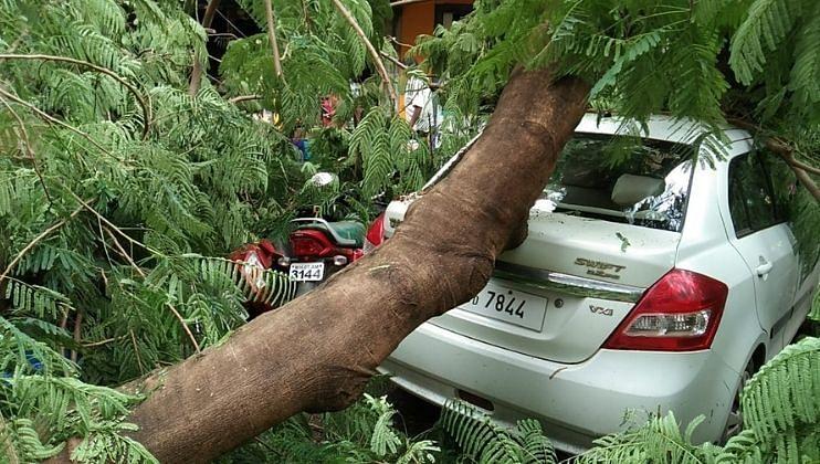 Vasco बाजारात वृक्ष कोसळल्याने वाहनांचे झाले मोठे नुकसान; जीवितहानी टळली