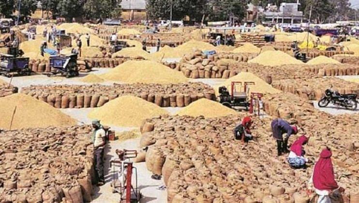 मोदी सरकारने रब्बी पिकांचा वाढवला MSP; शेतकरी संघटनांवर जोरदार हल्ला