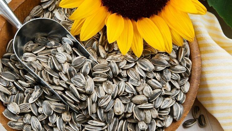 चमकदार त्वचेसाठी फायदेशीर ठरतात  सूर्यफूलाच्या बिया