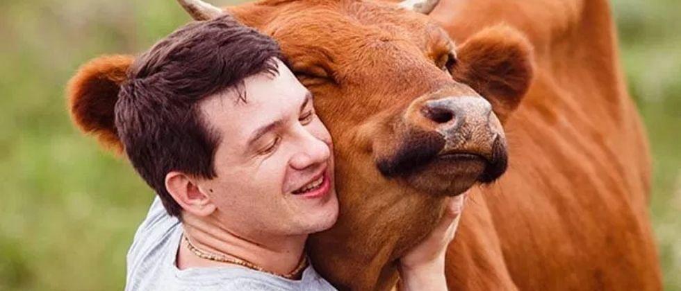 गाईला मिठी मारा आणि ताणतणावातून मुक्त व्हा; अमेरिकेत ट्रेंड होतोय Cow Hug