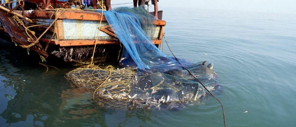 आफ्रिका खंडातून गोव्यात आलेल्या माशांमुळे नद्यांतील जैव संपदा नष्ट होण्याची भीती