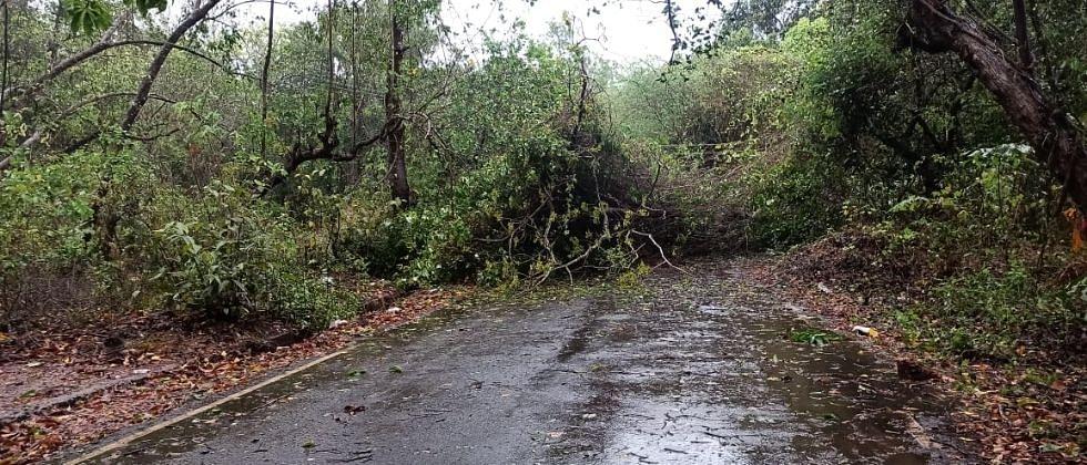 Cyclone Tauktae: झाडं पडले, छतं उडाले, गोव्यात तौकतेचे थैमान...