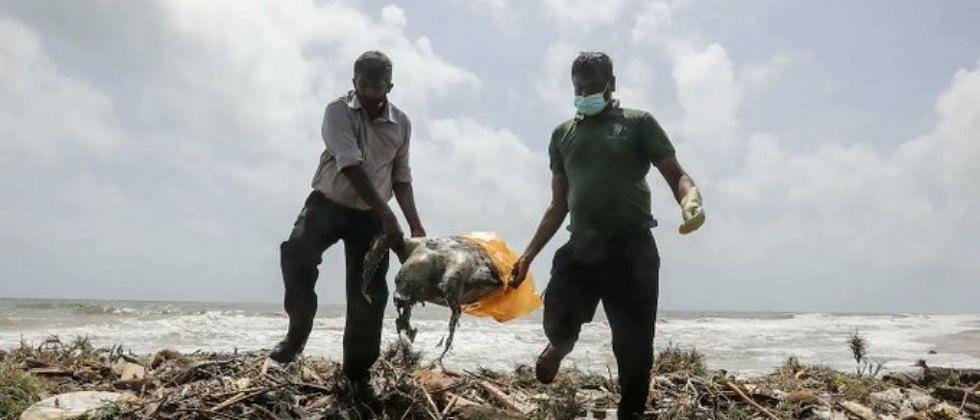 श्रीलंकेच्या समुद्रकिनार्यावर शंभराहून अधिक कासव, डॉल्फिन आणि ब्लू व्हेल मासे मृतावस्थेत सापडले
