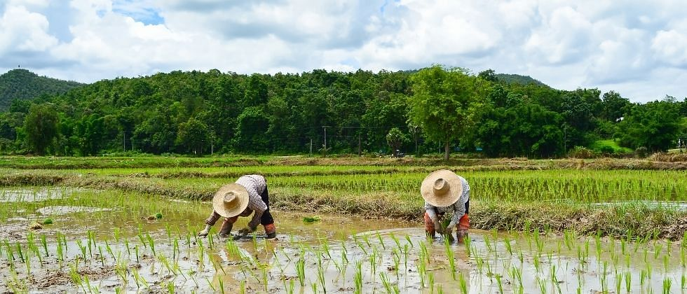 मॉन्सूनचा अंदाजपाहूनच शेतकऱ्यांनी पेरणी करावी : कृषी विभागाचा सल्ला
