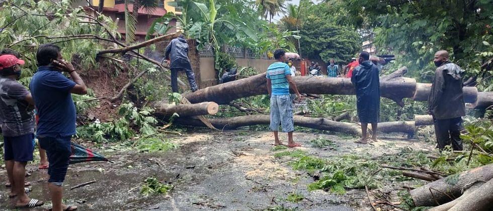 TAUKTAE Cyclone Update: गोव्यात 2 मृत्यूची नोंद; 500 झाडे कोसळली