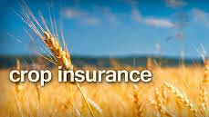 Govt nod to horticulture insurance scheme