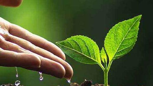 'वनमहोत्सव' म्हणजे जीवनाचा एक सण