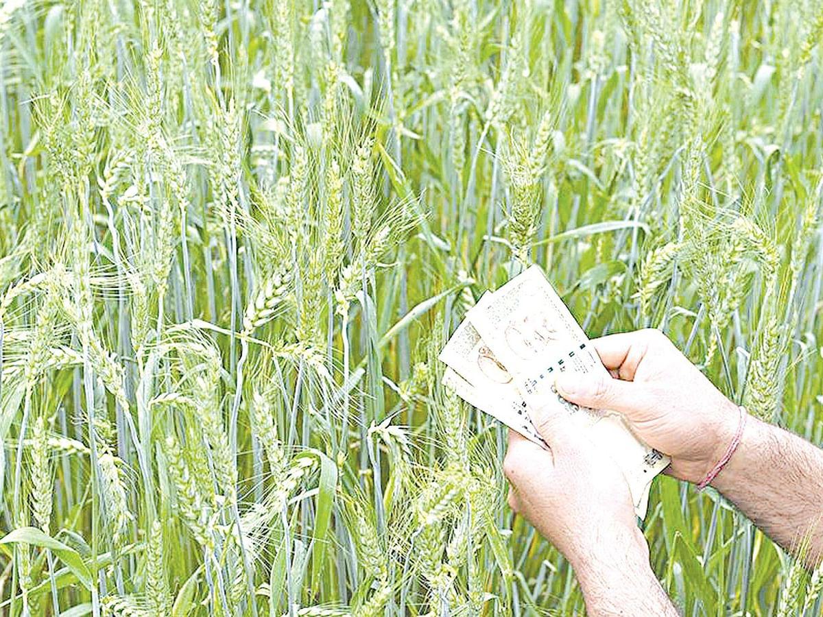 अकरा हजार सधन शेतकर्यांंना नोटिसा