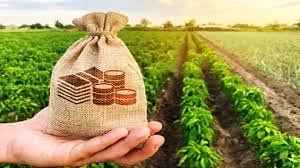 थकबाकीदार शेतकरी नवीन पीककर्जापासून वंचित