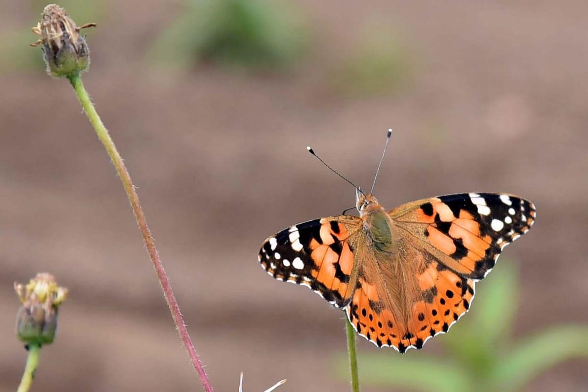छान किती दिसते फुलपाखरू