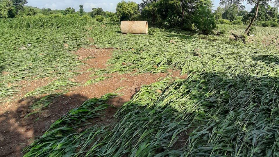ढगफुटीमुळे शेतकऱ्यांचे प्रचंड नुकसान
