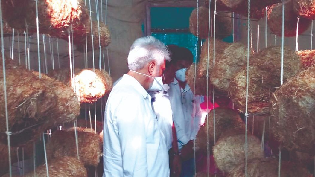 मशरुमच्या नाविन्यपूर्ण शेतीला कृषिमंत्री ना.दादा भुसे यांची भेट