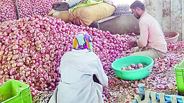 नाफेडला कांदा विकणार नाही, उत्पादक शेतकरी आक्रमक