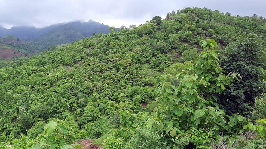 दरवर्षी पहिला पाऊस झाला की सातपुडाच्या पर्वत रांगेत मोठ्या प्रमाणात गवत व नविन झाडे, झुडुपे उगवतात.