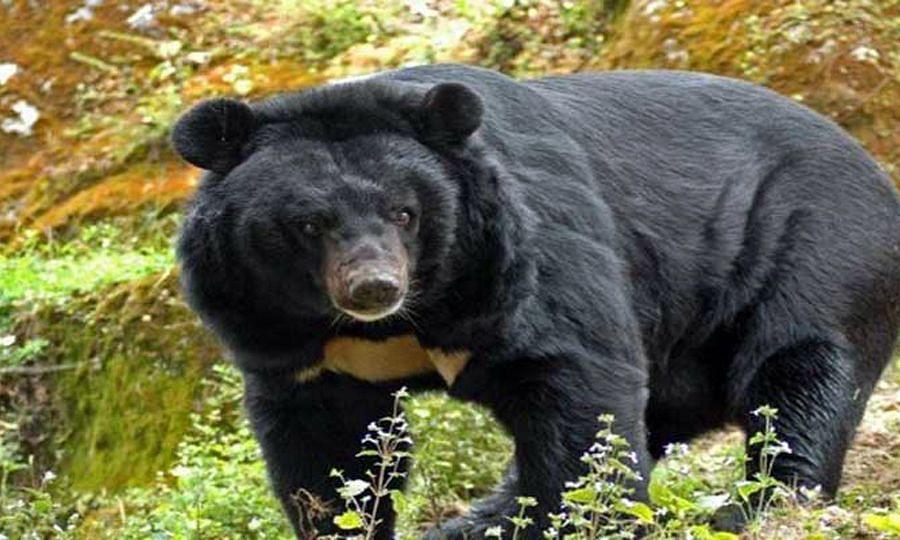 अस्वलाने केला शेतकऱ्यावर हल्ला ; प्रकृती गंभीर