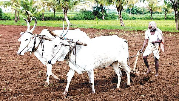 Dry patch worrying farmers in district