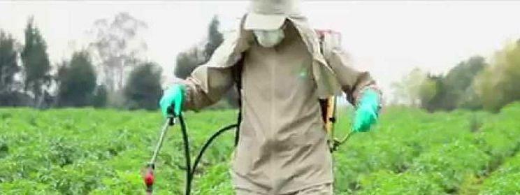 शेतकऱ्यांनी फवारणी वेळी सुरक्षा किट वापरा