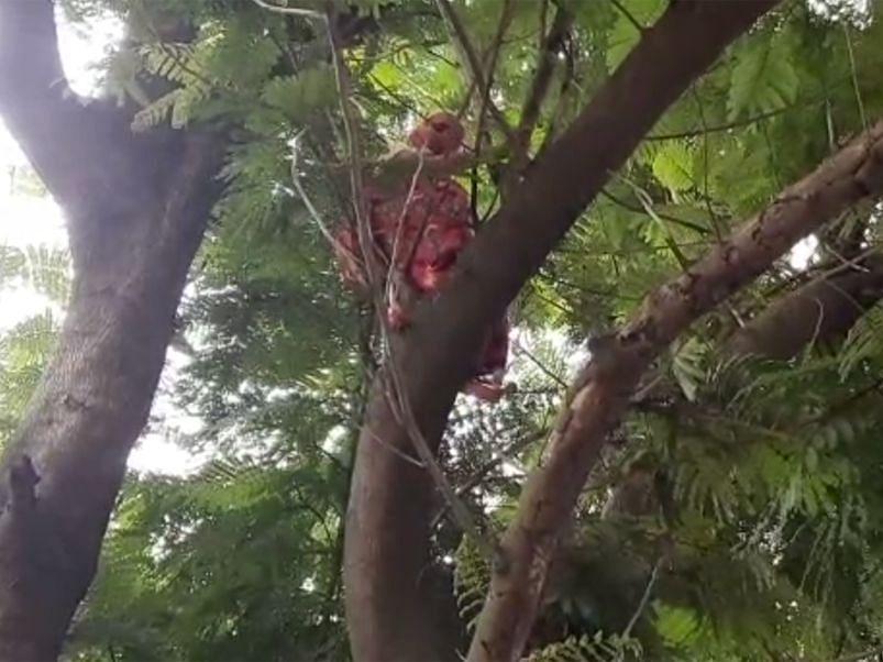 पतीच्या अटकेसाठी महिलेचे झाडावर चढून आंदोलन