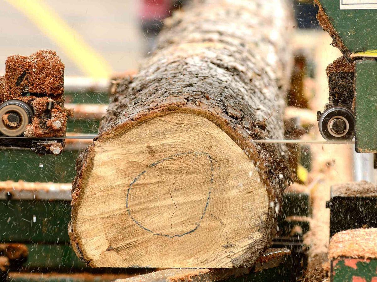 बेकायदेशीर वृक्षतोड प्रकरणी घुलेवाडीच्या सॉ मीलवर कारवाई