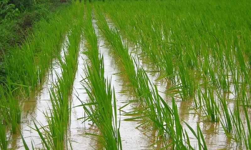 ओढ्याचा नैसर्गिक प्रवाह रोखल्याने शेतात घुसले पाणी