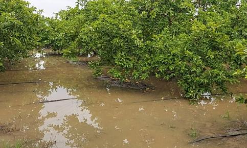 सलग दोन दिवस झालेल्या अतिवृष्टीने शेतीपिकांचे लाखोंचे नुकसान