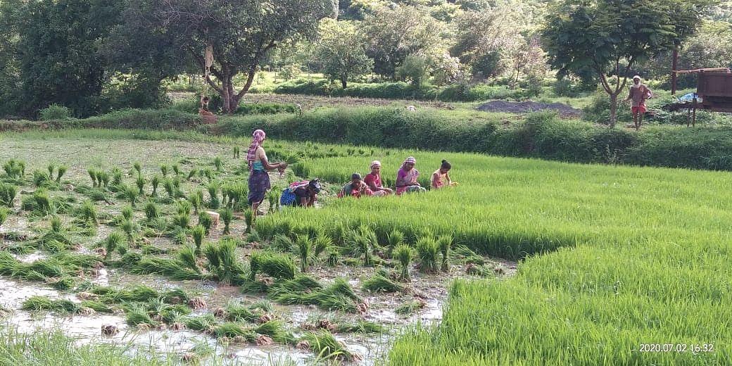 त्र्यंबकेश्वर तालुक्यात सध्या भाव आवणीला शेतकऱ्यांनी प्रारंभ केला आहे